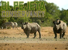 Students Exchange Programme - Ol Pejeta Conservancy 2020
